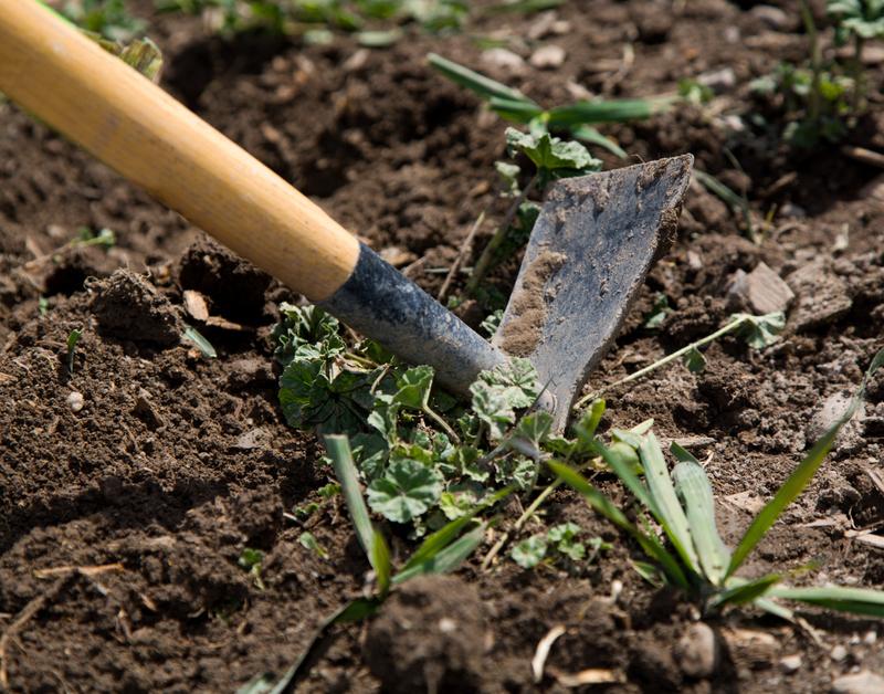 Quels outils utiliser pour labourer son jardin ?