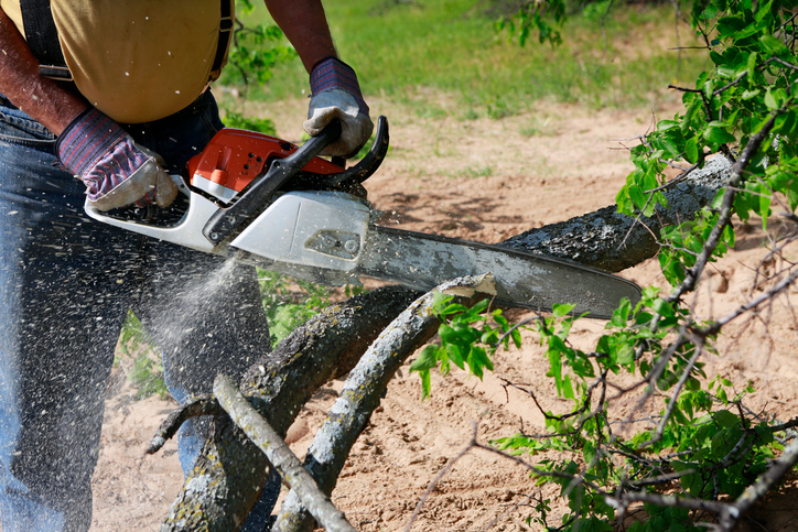 Quelles sont les techniques pour abattre un arbre ?