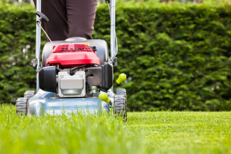 Quand faut-il tondre sa pelouse ?