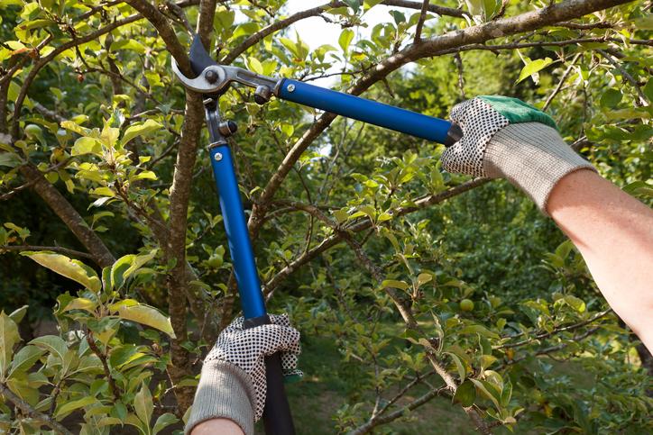 Que faut-il savoir sur la coupe de branches basses ?