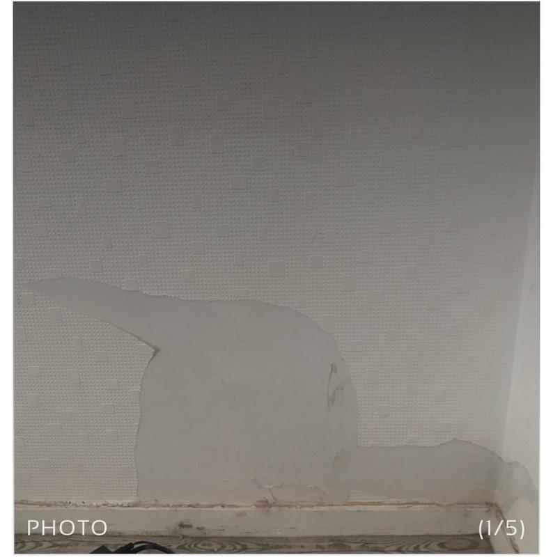 Décollage de papier peint collage de papier peint, La rochelle, Pose et décollage de papier ...